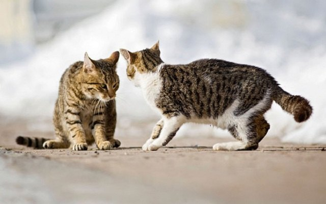 How to deal with a territorial cat